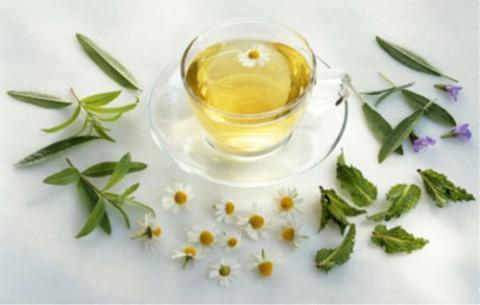 Trà hoa cúc trắng mật ong